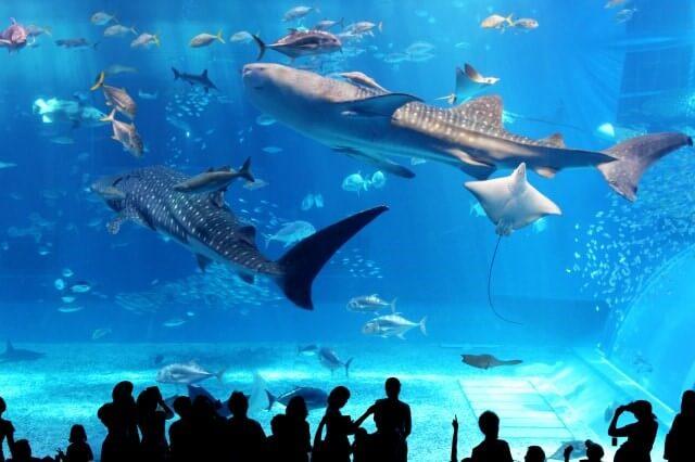 Окинава аквариум