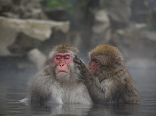 Онсен и обезьяны