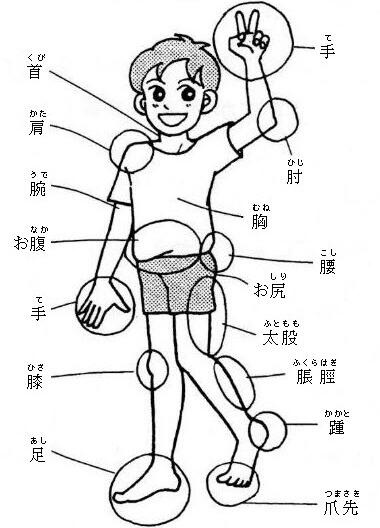 Части тела на японском языке тело